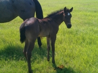 Rafter D Ranch Foal
