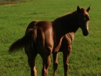 Rafter D Ranch Horses