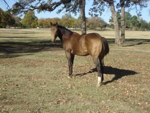 RD Bueno Texas Ranger